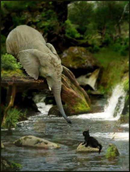 ELEPHANT SAVING CAT