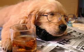 DOG WITH GLASSES AND NEWSPAPER