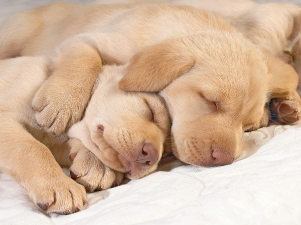 PUPPIES AND ONE WITH PAW ON OTHER