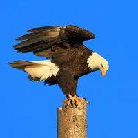 Bird on Tree Stump