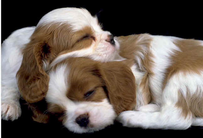 BROWN AND WHITE PUPPIES SLEEPING