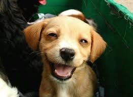 ANOTHER SMILING PUPPY