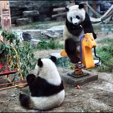 More fun than eating Bamboo