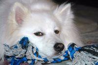 Donna Bader Dog, Casper_-2