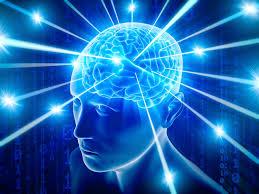 Paralegal Brain